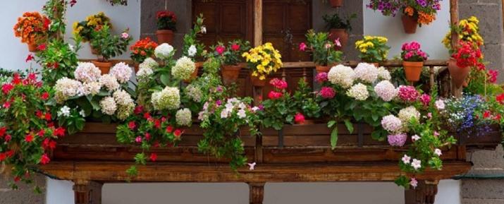 Flores en el balc n for Balcones decorados con plantas